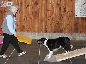 Dog Obedience Training London Ontario