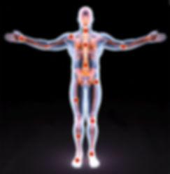 anatomy_portal.jpg