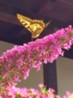 Schmetterling Garten.JPG
