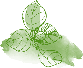 Las hojas de la acuarela