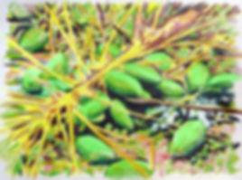 jardin 2019 mathieu le breton