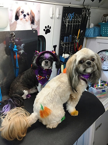 Dog Grooming Prices Long Island