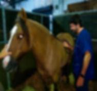 nuestros caballos.jpg