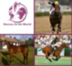 horses 1 v2.jpg