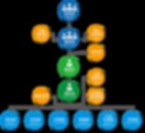 organization flow chart_2020.png