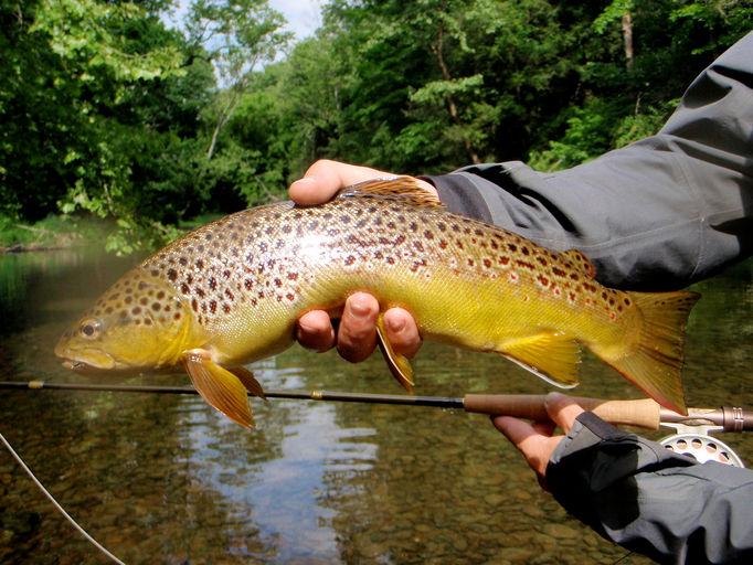 Appalachian angler fly fishing guide service boone nc for Nc lifetime fishing license