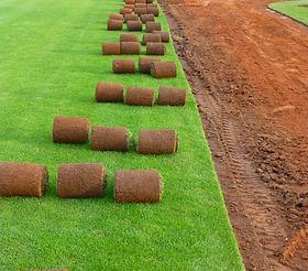 Kobercový trávník.jpg