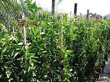 Viveros rancho calderon color y variedad en un solo for Viveros en colima
