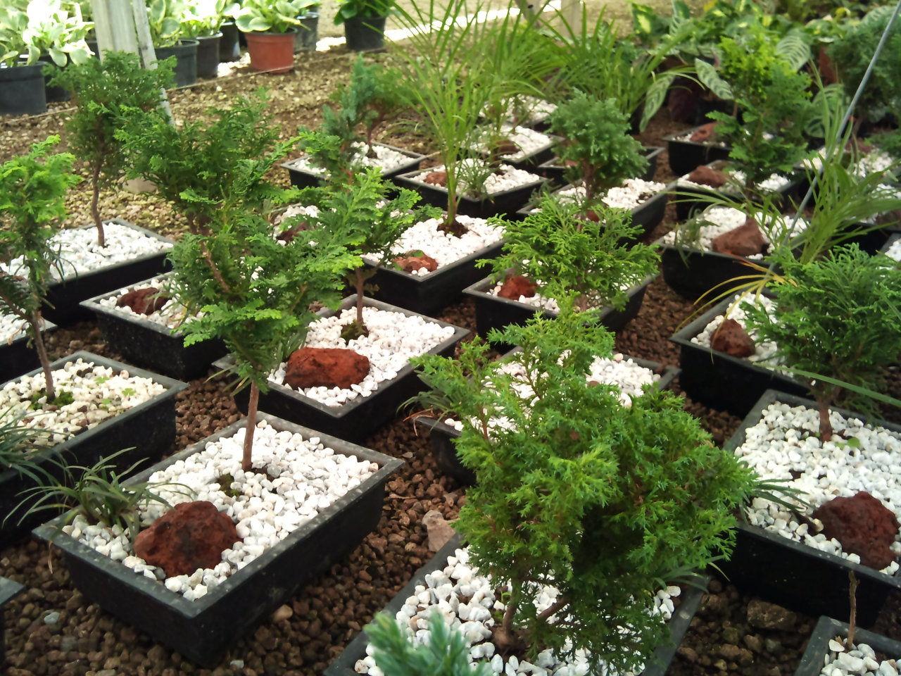 Viveros rancho calderon arboles y palmas for Viveros arboles frutales