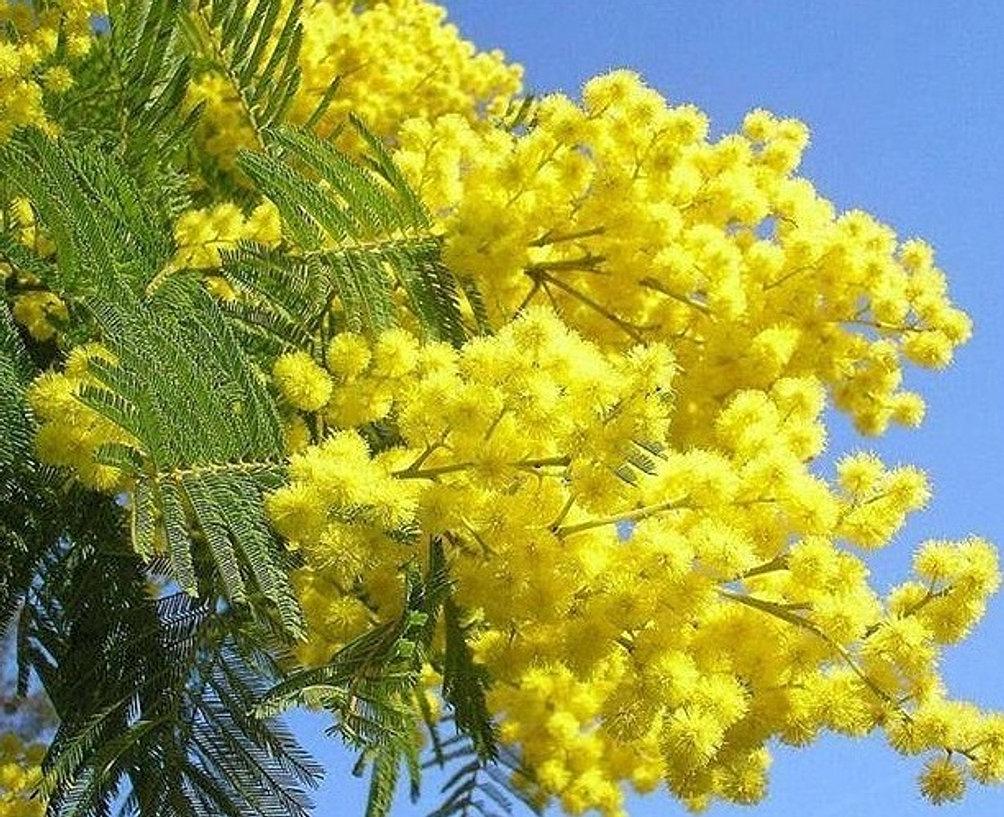 quintal jardim gloria : quintal jardim gloria: esta página com mais flores do jardim do seu quintal. Obrigado
