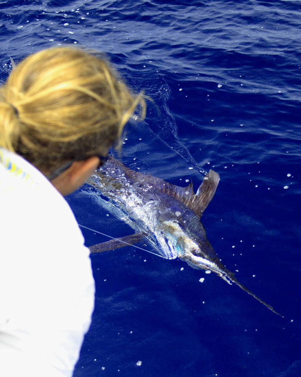 Key largo fishing charters miss chief charters for Whiting fish florida