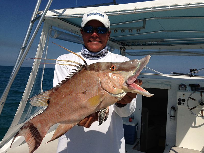 Key largo fishing charters miss chief charters hogfish for Key largo fishing guides