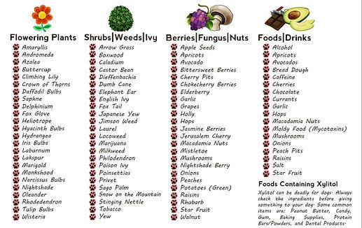 Poisonous-Plants-Foods-for-Pets_edited.j