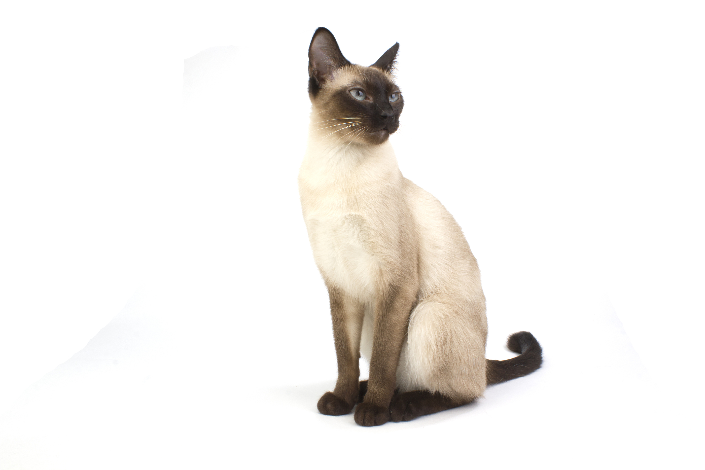 cat north maryland