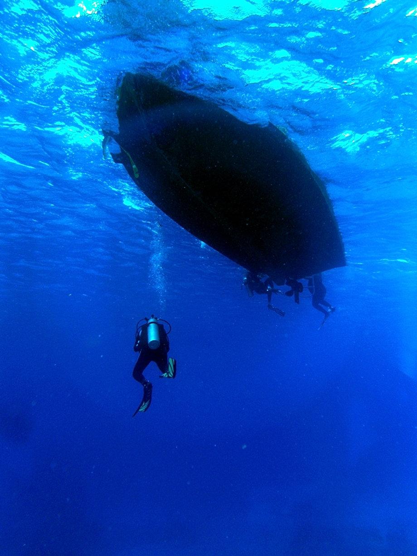 Best dive shop in cozumel aqua safari scuba diving in cozumel - Cozumel dive packages ...
