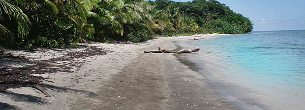 cahuita-national-park-6.png