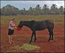 PaulineLong_horse photo.jpg