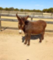 Francis the donkey.jpg