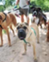 dogwalking3.jpg