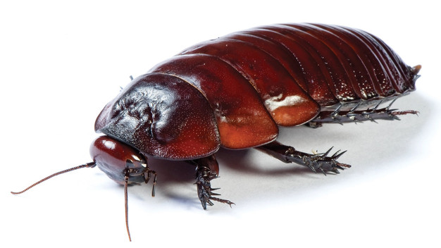 Why You Can't Get Rid of Cockroaches | RESYS Las Vegas Property ...
