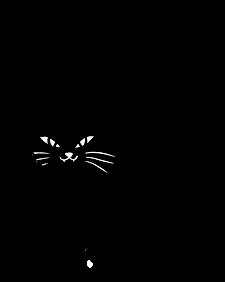 Katze sündiger Sonntag