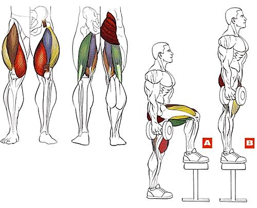 Программы и упражнения для тела НОГИ