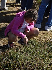 2013 Cranberry Marsh Tours - Youngsters enjoying the tours! 2.jpg