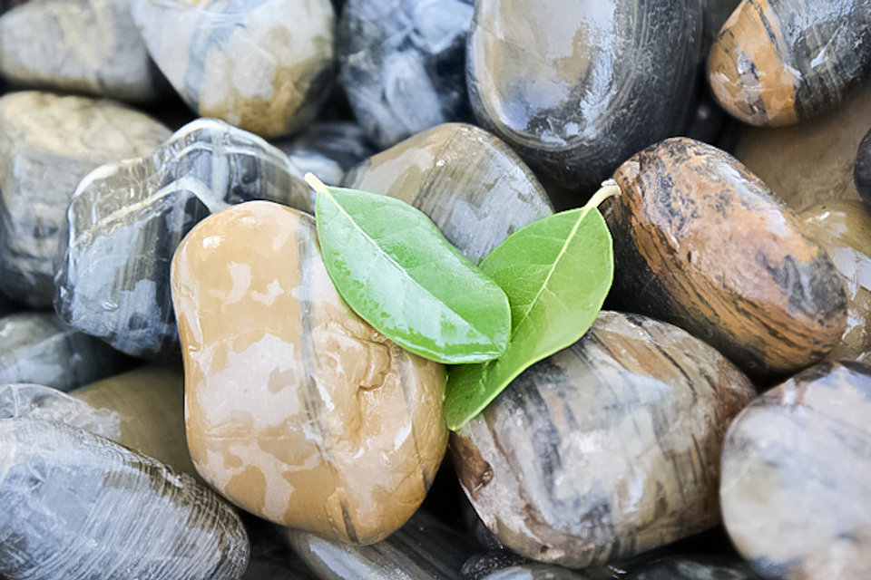 אבנים -  ניצן לגינה