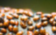 pest control sapulpa