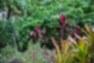 211-Mt-Uncle-Garden.jpg