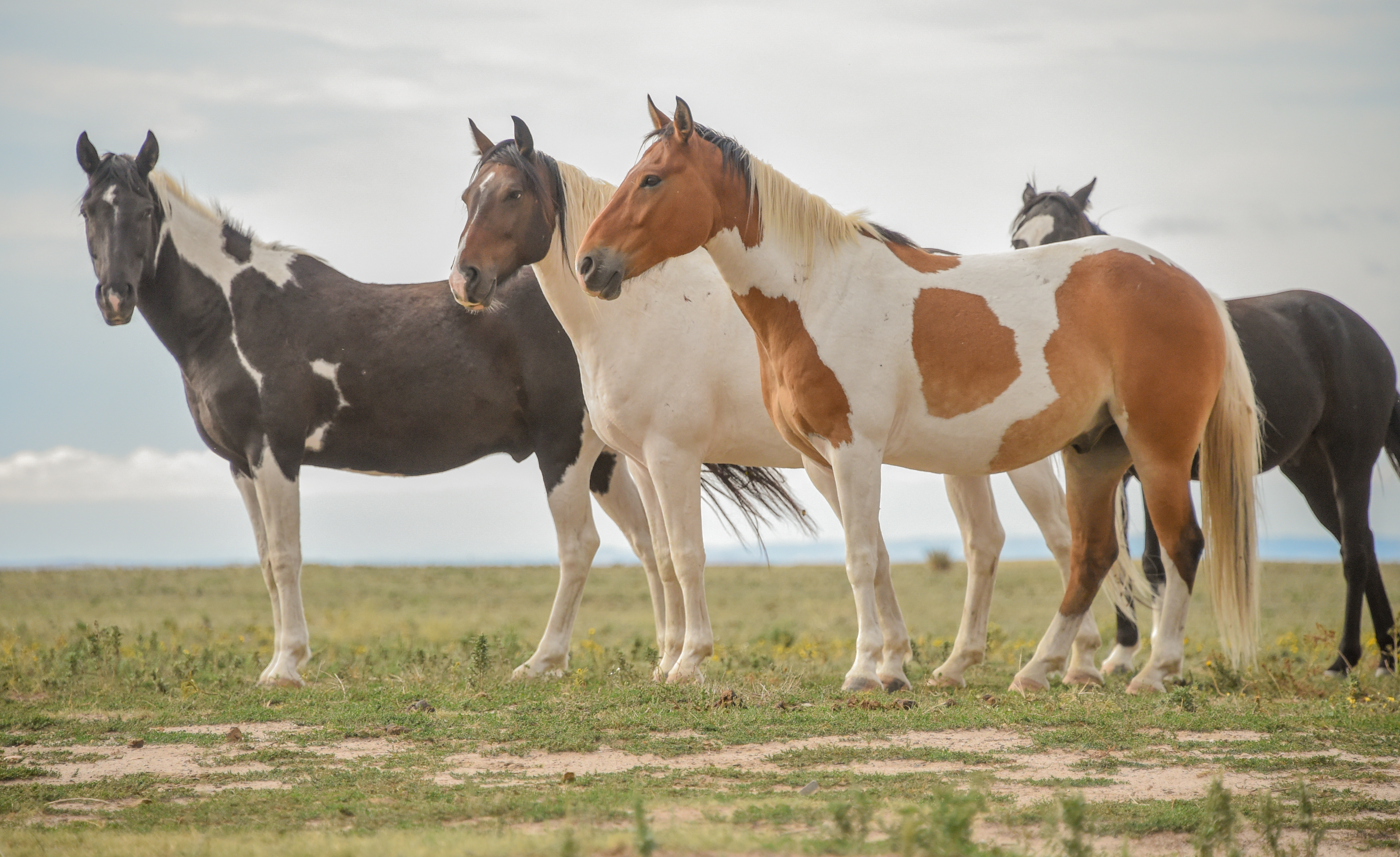 "wild horse online dating Release date: jun 5, 2018  ""we are honored to have this wild horse herd on  the modoc national forest,"" said forest  this action is prescribed by the 2013  devil's garden plateau wild horse territory management plan found online at."