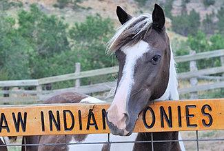 Choctaw Pony