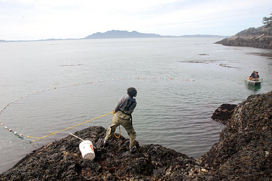 ecological importance of estuaries biology essay Ecology and conservation biology ucd's most important database on the biology, ecology, technology and management of marine, freshwater, and brackish water environments and organisms ecological economics of estuaries and coasts.