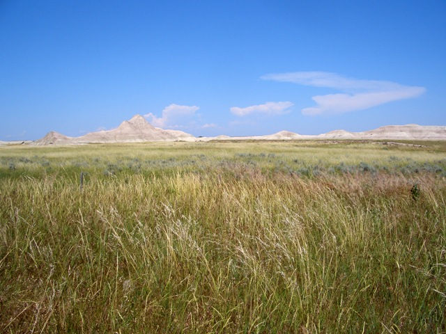 temperate grassland - ThingLink