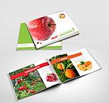 Fruit Brochure Design