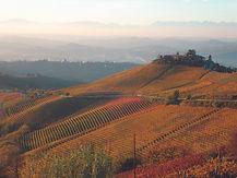 vigne autunno.jpg