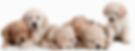 Puppy Check Gratis Gezondheidscontrole Dierenarts Goes Wemeldinge