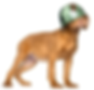 Preventie Pakket Preventieve Diergeneeskunde Hond Kat Dierenarts Goes Wemeldinge