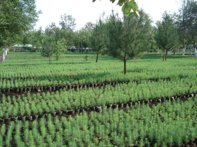 Viveros forestales nueva creaci n s c for Tipos de viveros forestales