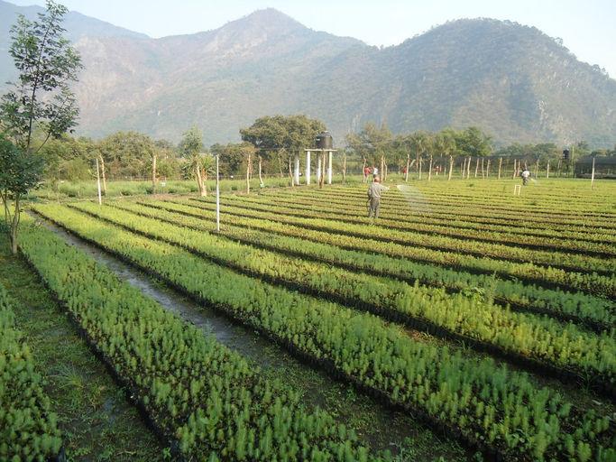 Viveros Forestales Nueva Creaci N S C