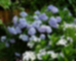 Gwendolyn Johnson Design | Landscape Design, garden design, sun gardens, shade gardens, rain gardens, right plant, right place, low maintenance, existing and new beds