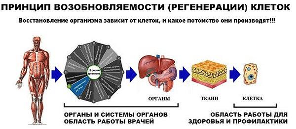 схема из чего состоит тело природы