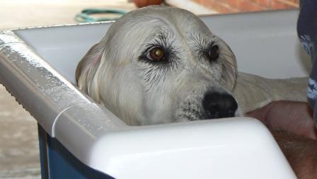 Sasha - During Hydrobath