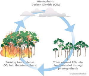 deforestation causes climate change essay Deforestation and climate change deforestation is one of the main contributors to climate change forests causes of deforestation lumber industry a large contributing factor to deforestation is the lumber industry.