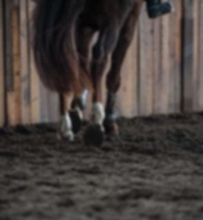 Barefoot horse trotting.