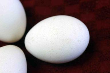 Sapphire egg.jpg