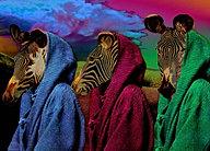 The Three Monk Zebras
