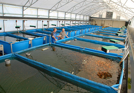Special offers for Koi fish farm