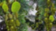GreenHouseWeb.jpg