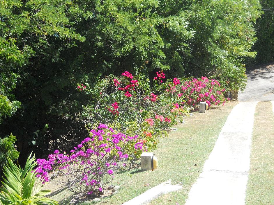 Grenada Rentals